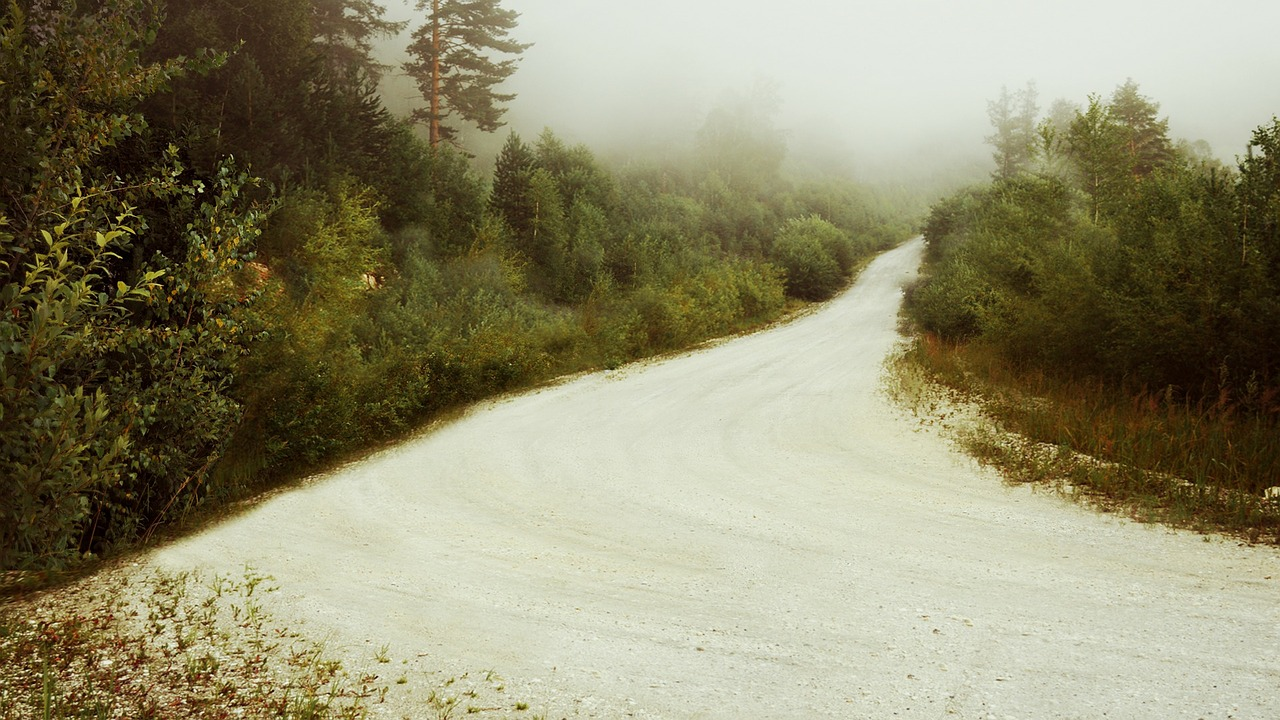 forest fog road free photo