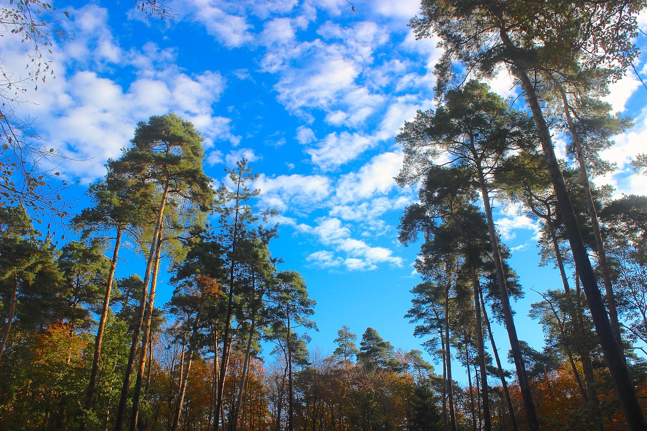 forest trees sky free photo