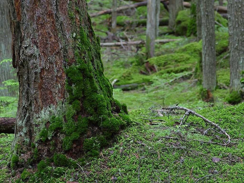 forest moss green free photo