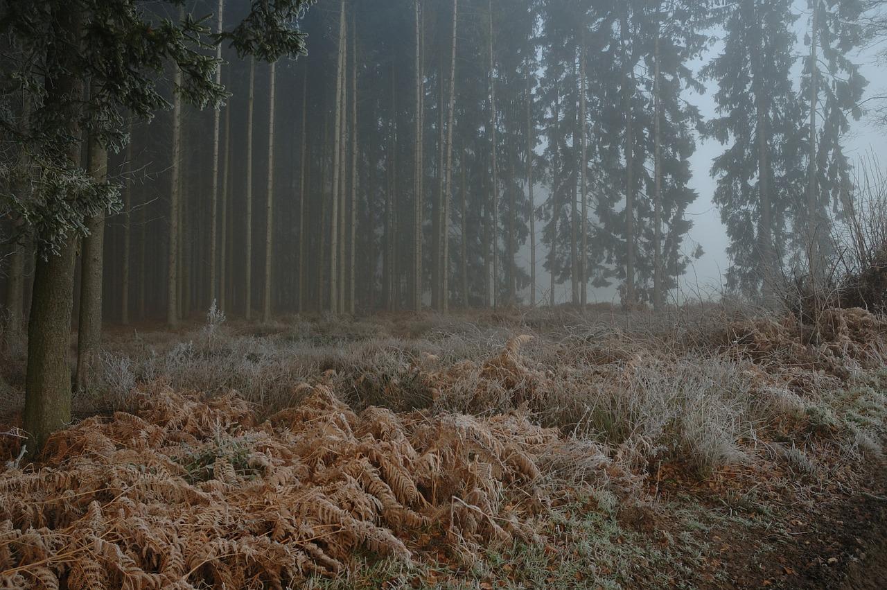 Forest Misty Foggy Nature Tree Free Photo From Needpix Com