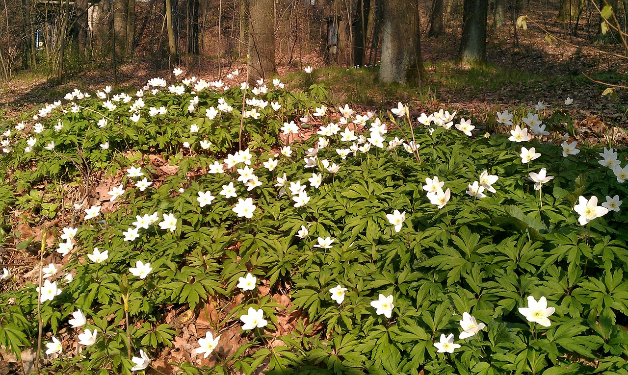forest flowers germany free photo