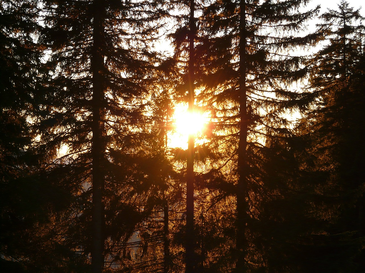 forest tree sun free photo