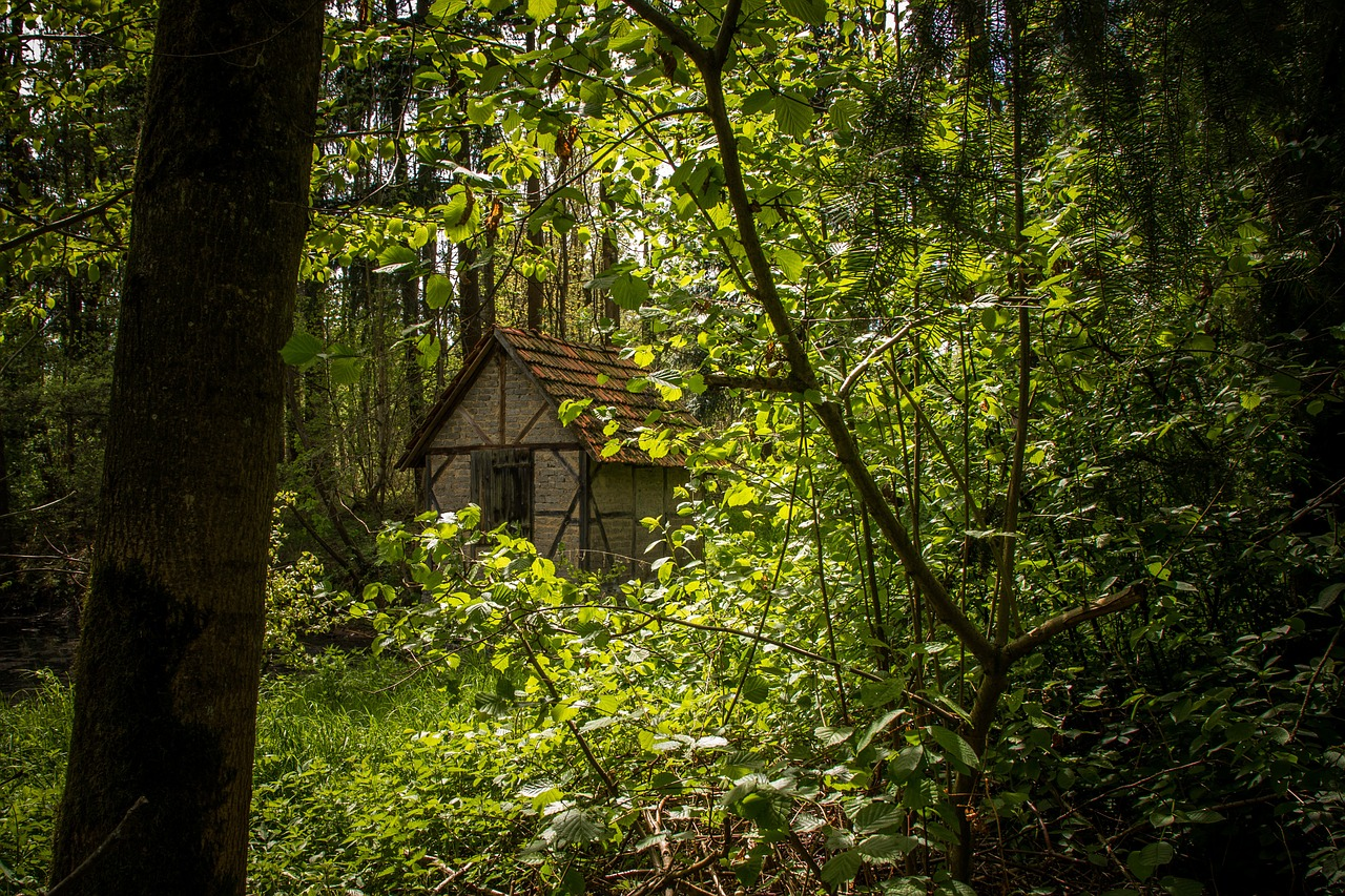 forest leaving green witch's house free photo