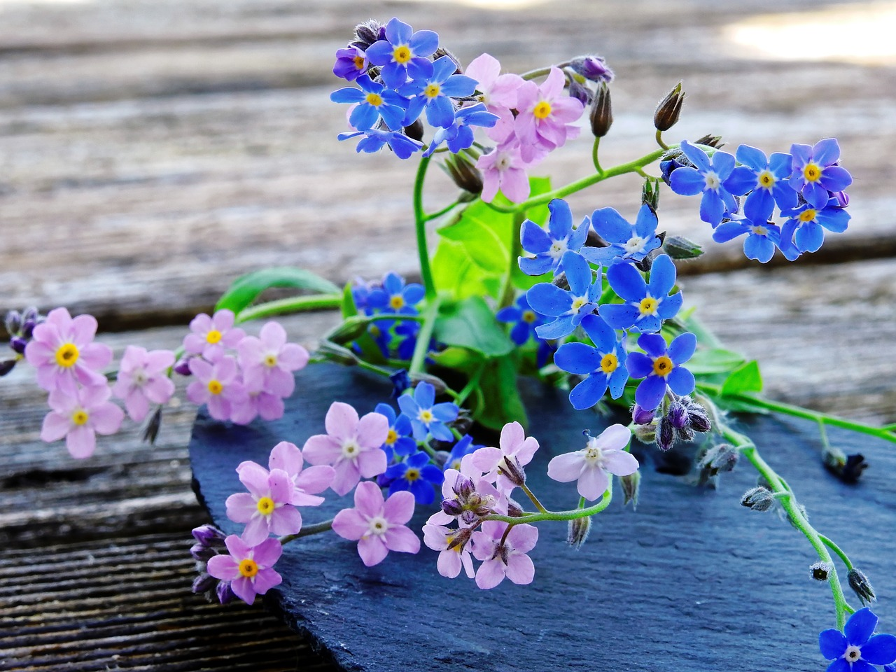Forget Me Notflowersbluepinkpointed Flower Free Photo From
