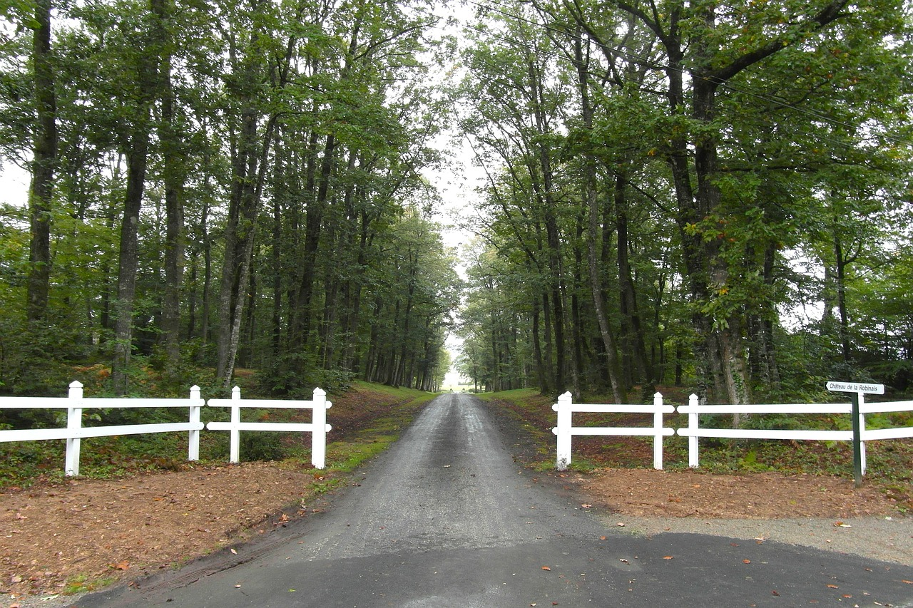 france trees road free photo
