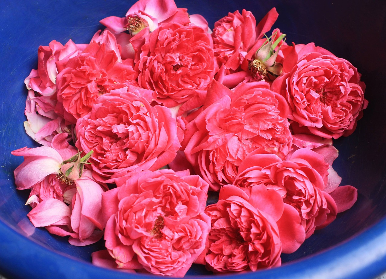 fresh roses potpourri aromatherapy free photo