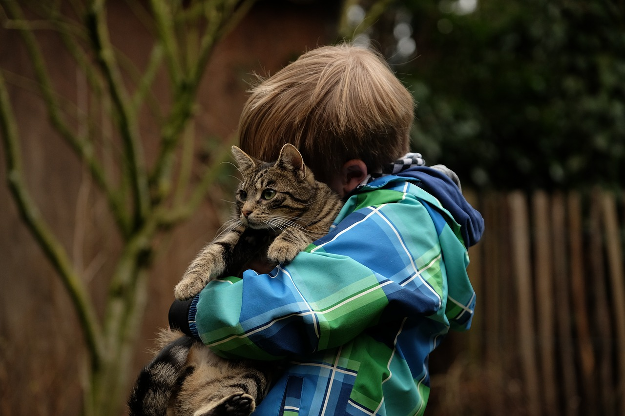 friendship child cat free photo