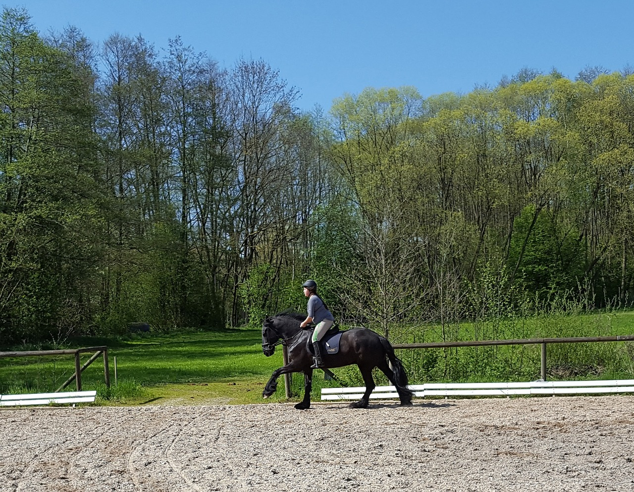 friese horsewoman gallop free photo