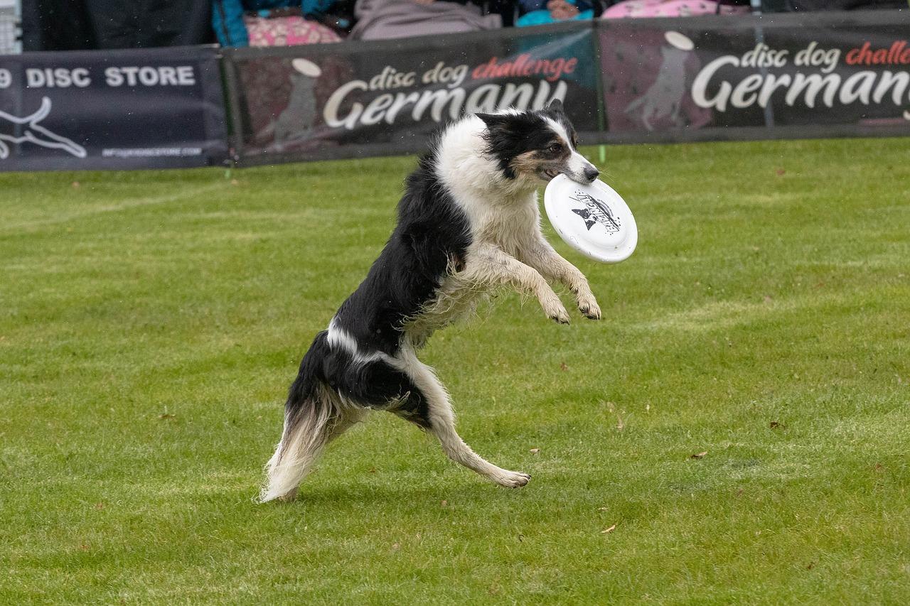Dog training discs