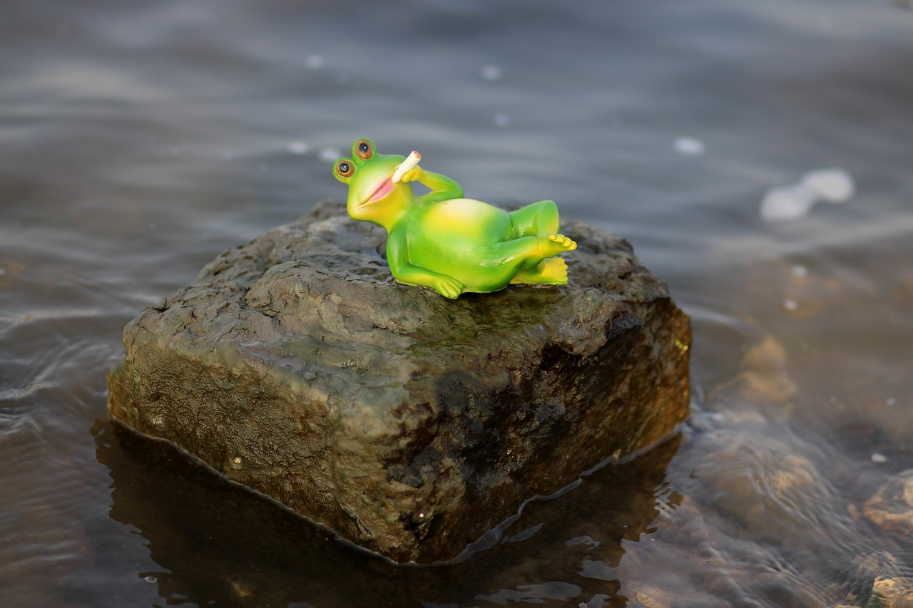 frog water lazy free photo