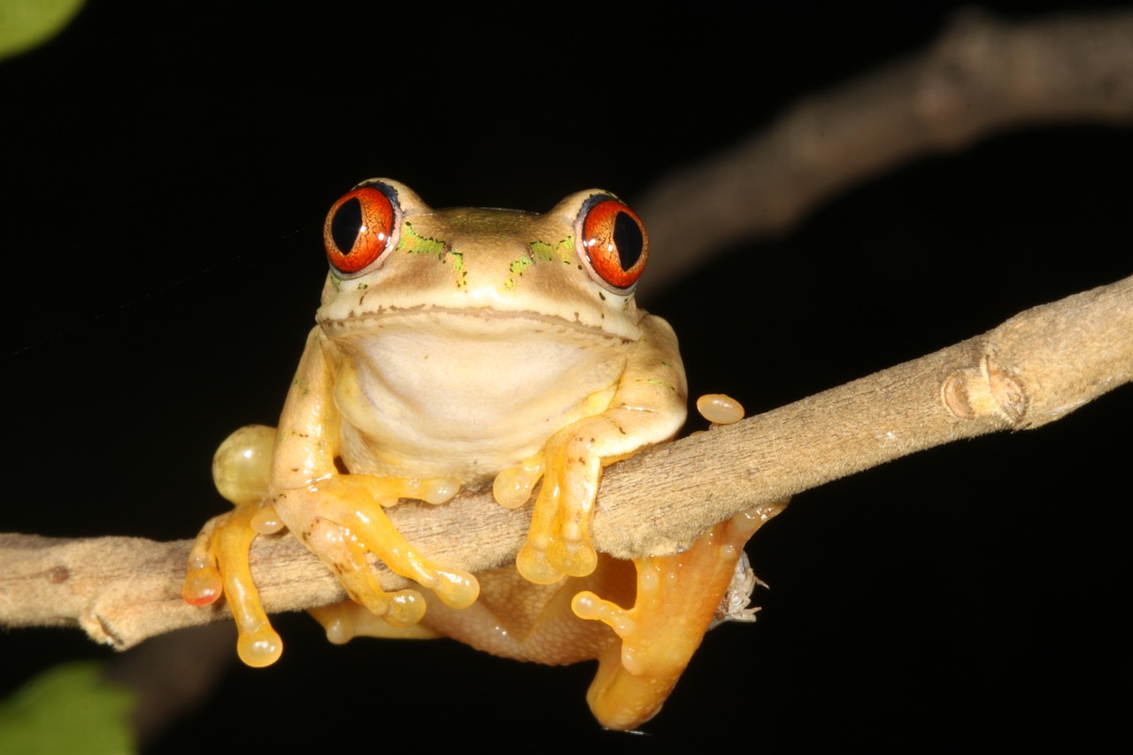 frog  durban  south africa free photo