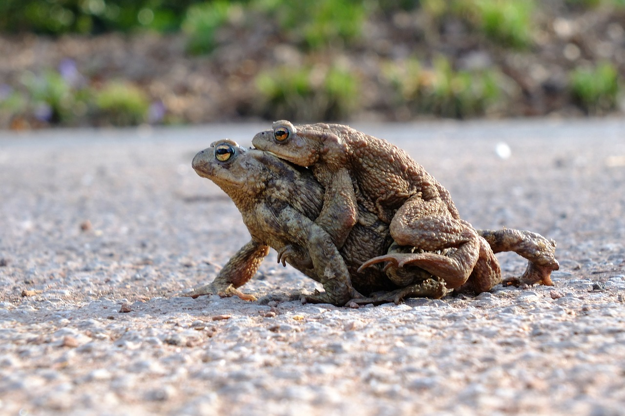 frogs toads amphibians free photo