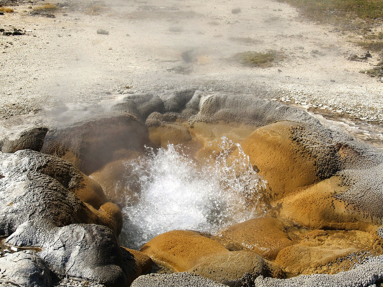 fuming geyser yellowstone national park free photo