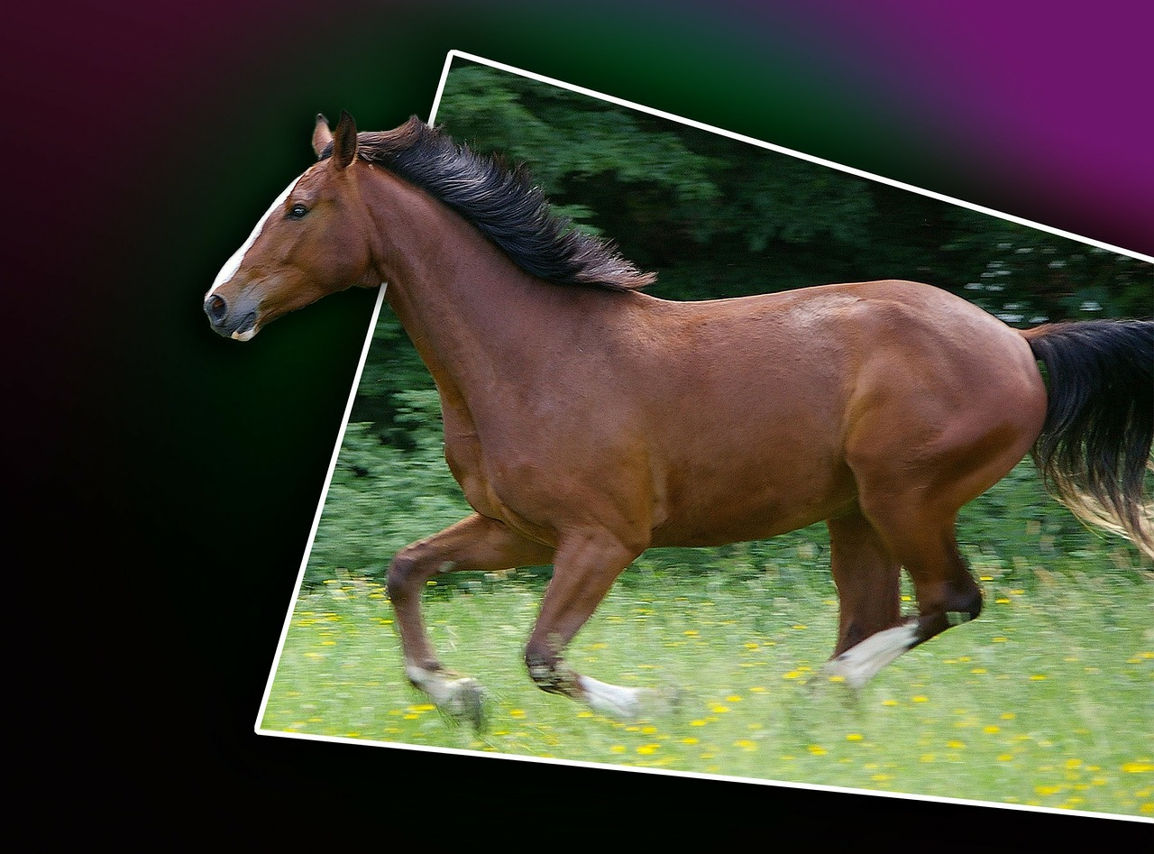 galloping horse out of bound gradient free photo