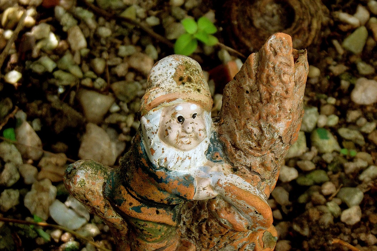 garden dwarf gnome free photo