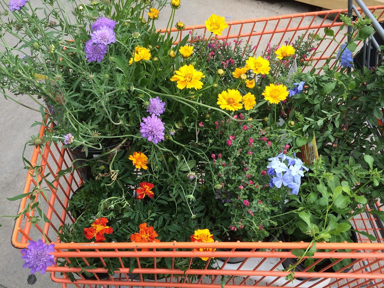 Download free photo of Gardening,planting,garden centre,flowers ...