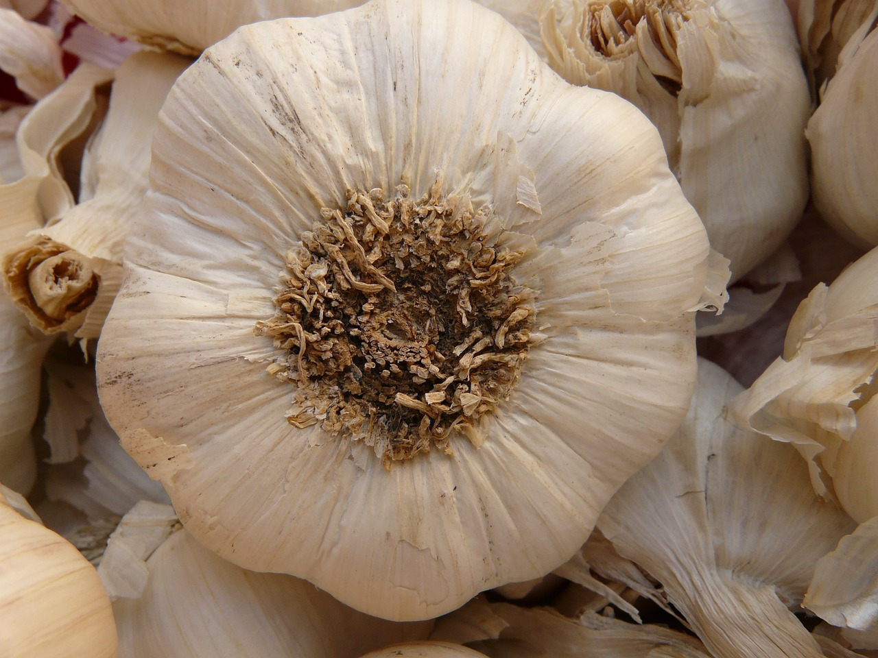 garlic sharp aromatic free picture