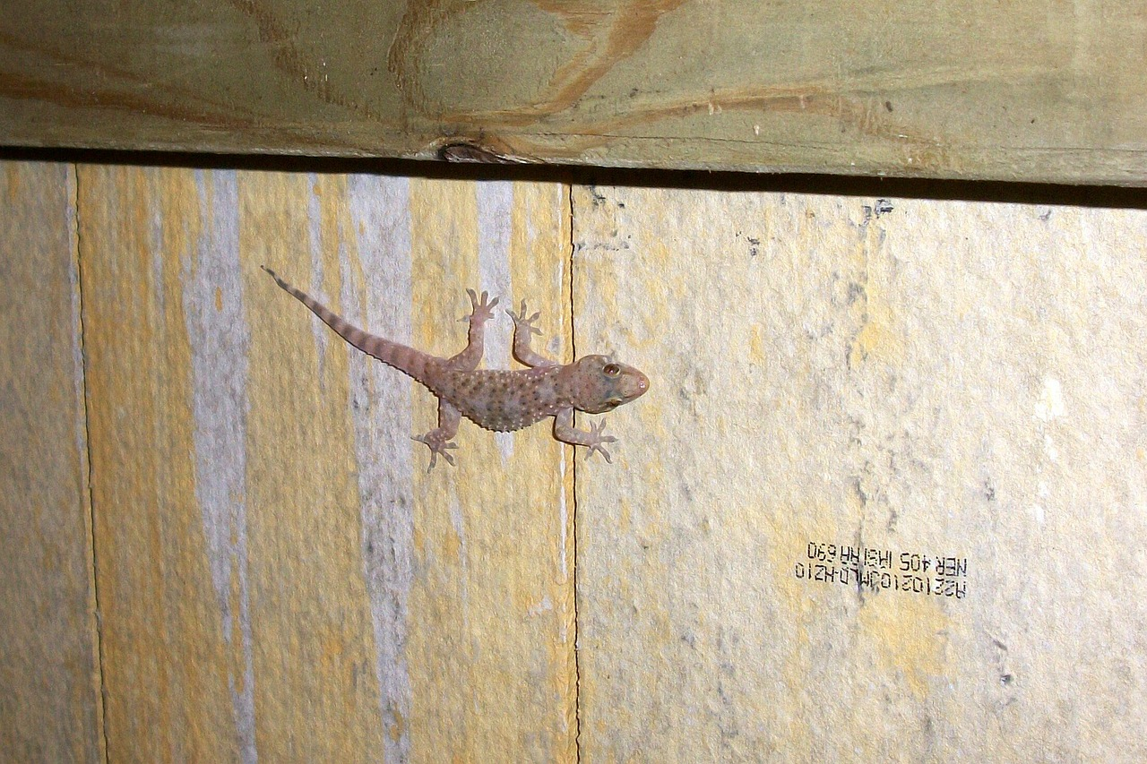gecko salamander reptile free photo