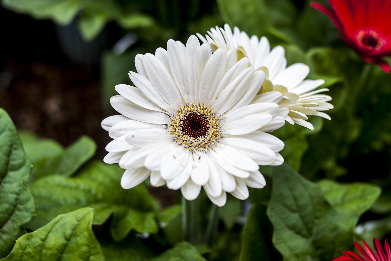 Grbela Whiteflowerplantnaturegarden Free Photo From Needpix