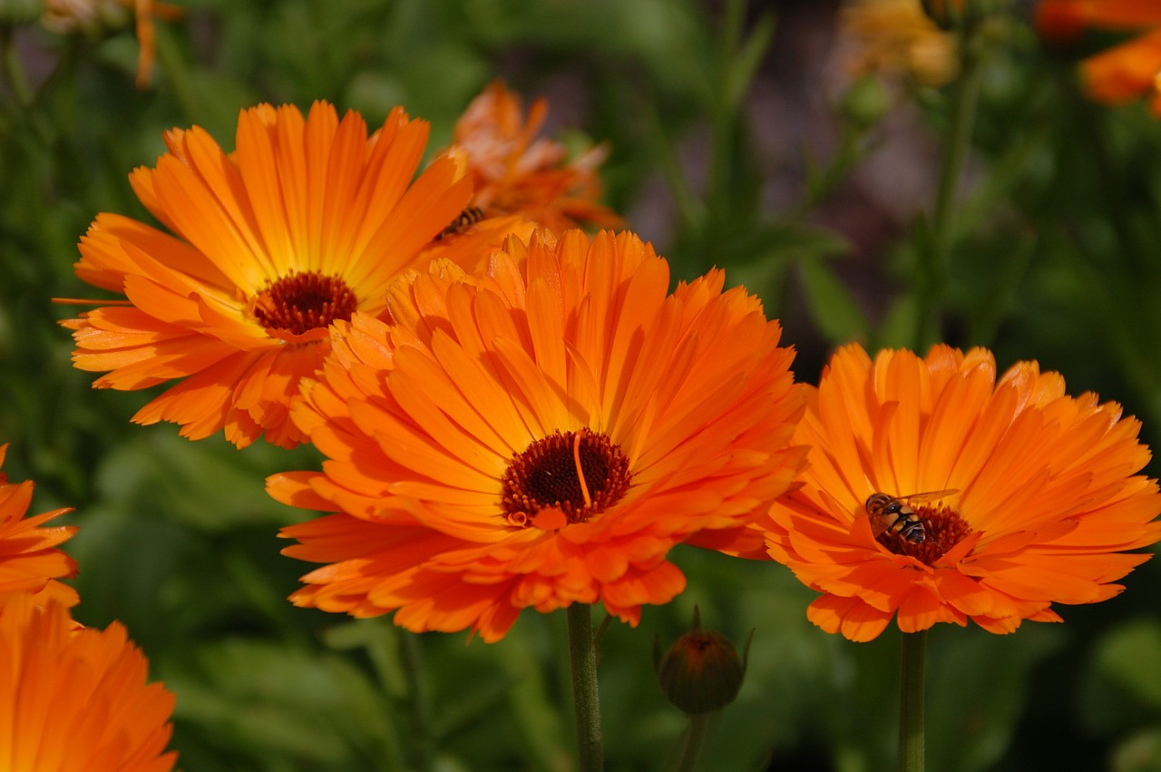 gerbera flower orange free photo