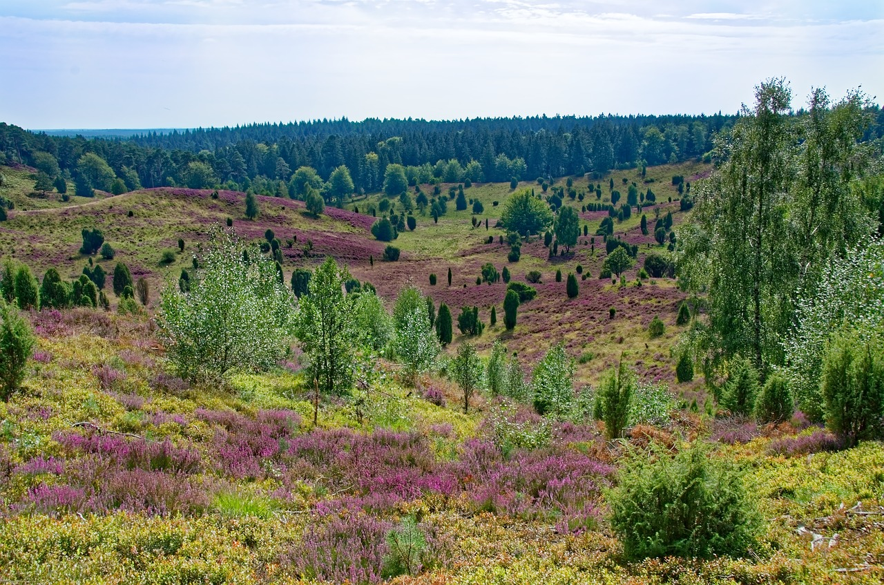 germany  lüneburg heath  heathland free photo
