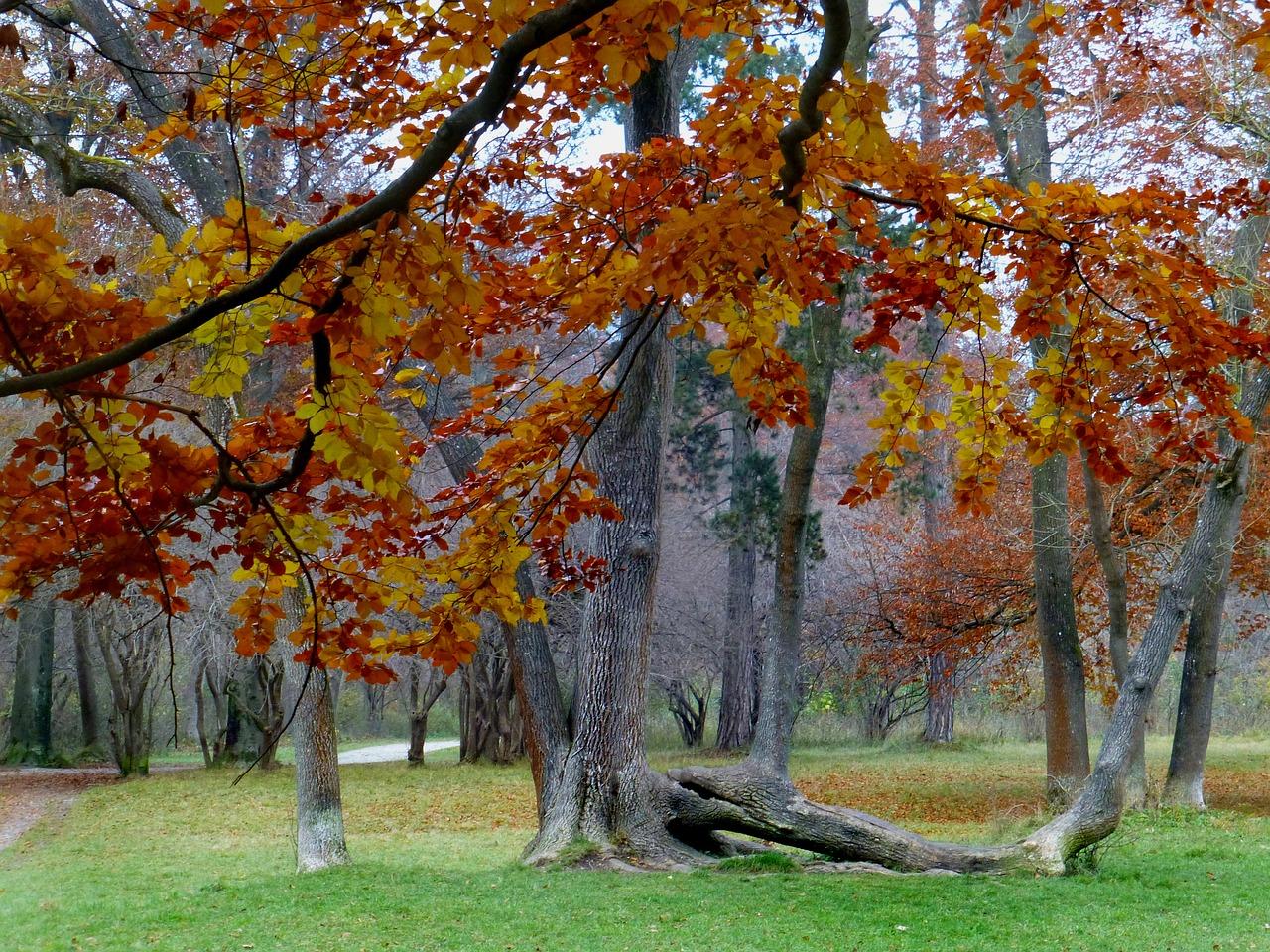 Golden autumn,book,park,english garden,free pictures - free photo ...