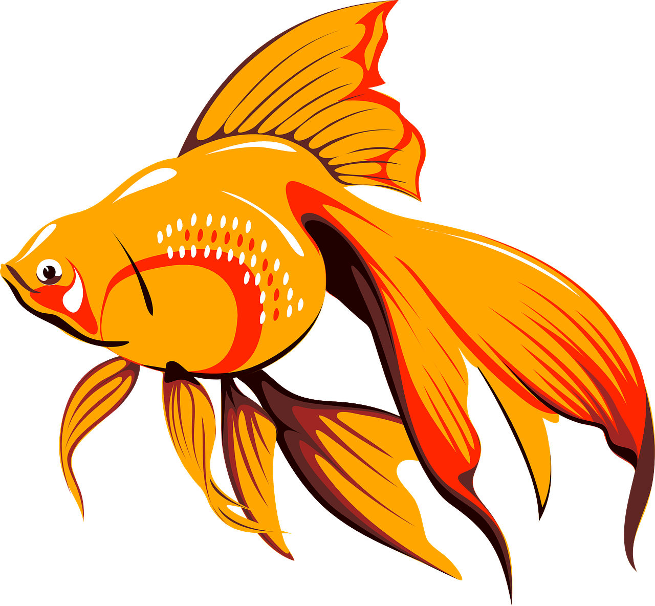 goldfish fish tank free photo