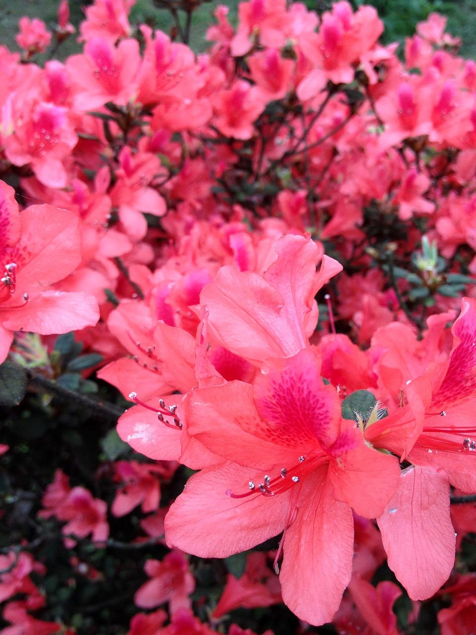 Gorgeous Beautifulflowersflower View Free Photo From Needpix