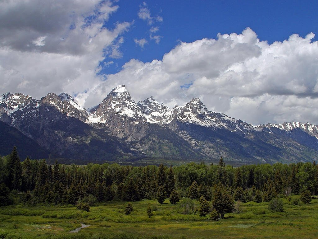 grand teton flowers wyoming usa free photo