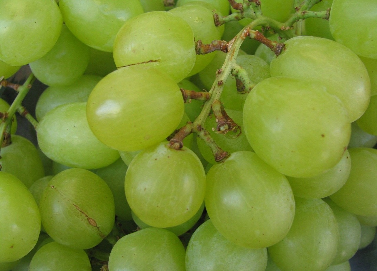 grape green fruit free photo