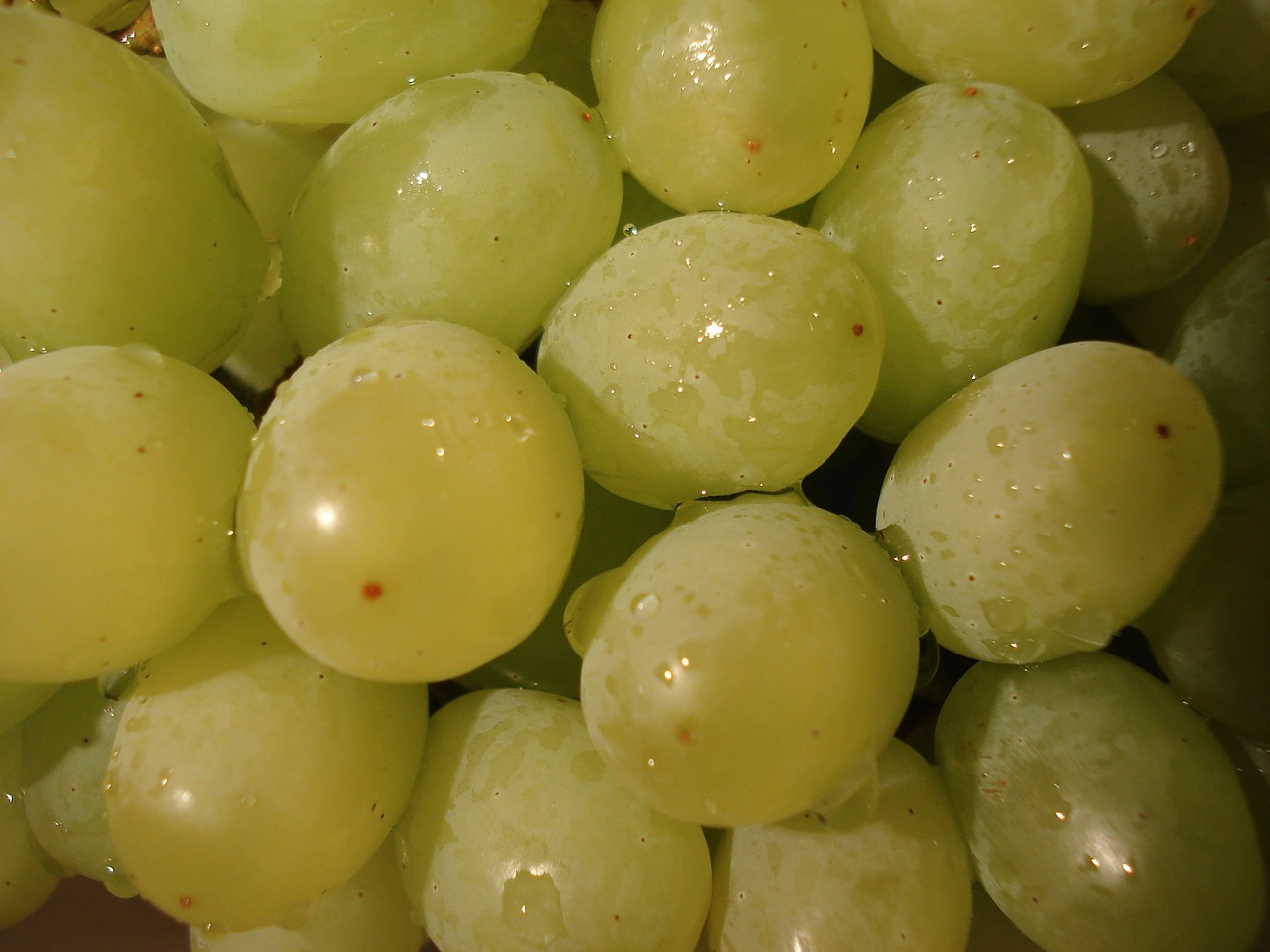 grapes fruit green free photo
