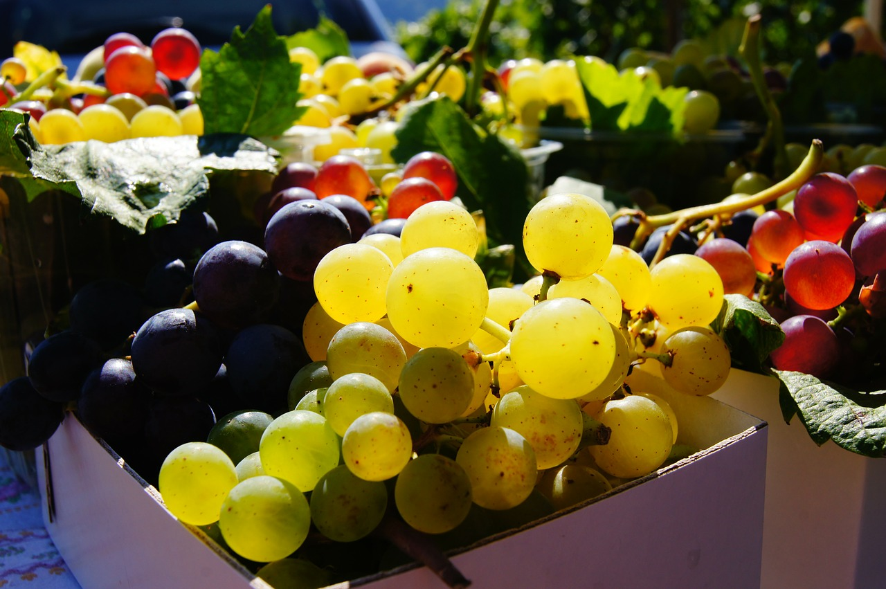 grapes fruit colorful free photo