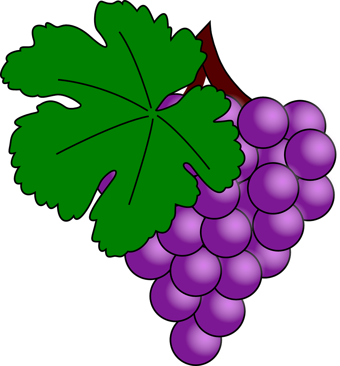grapes fruit purple free photo