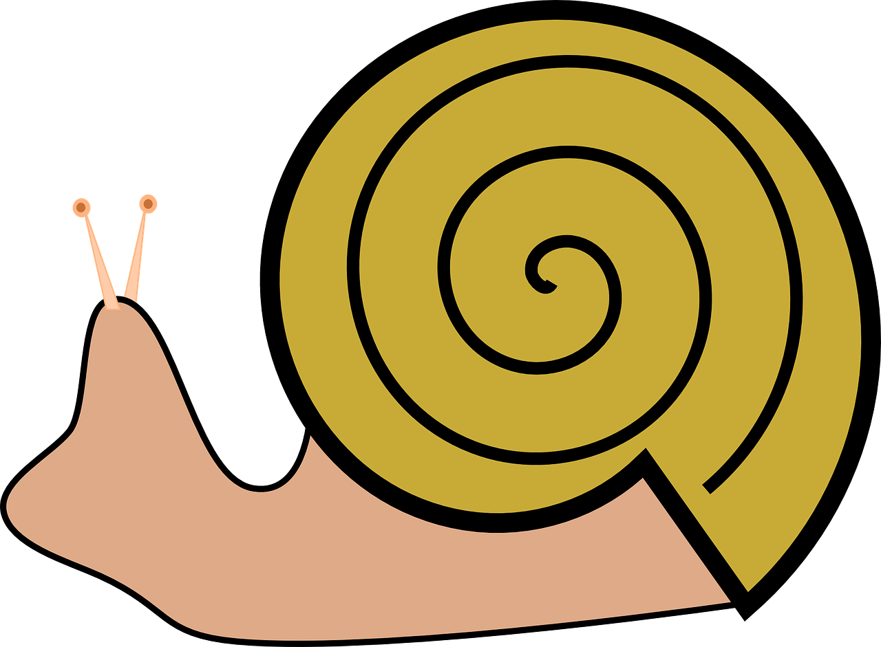 grapevine snail,slug,snail,roman snail,large garden snail,edible snail,shell,spiral,free vector graphics,free pictures, free photos, free images, royalty free, free illustrations, public domain