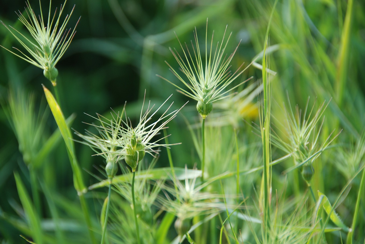 grass weeds background free photo