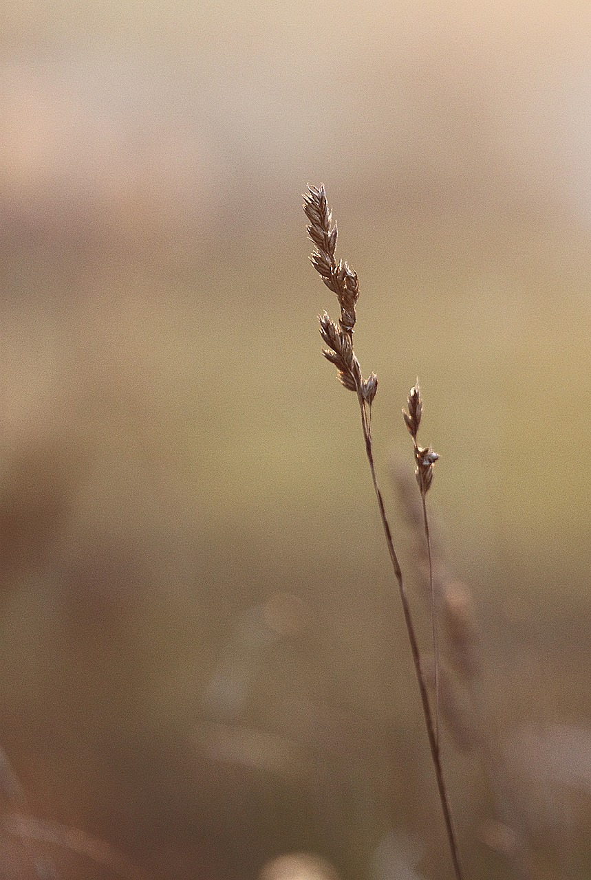 grass march nature free photo
