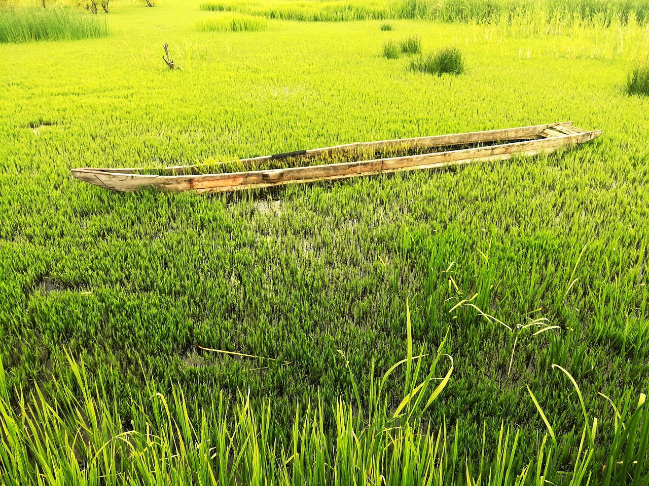 grass,ship,green,free pictures, free photos, free images, royalty free, free illustrations