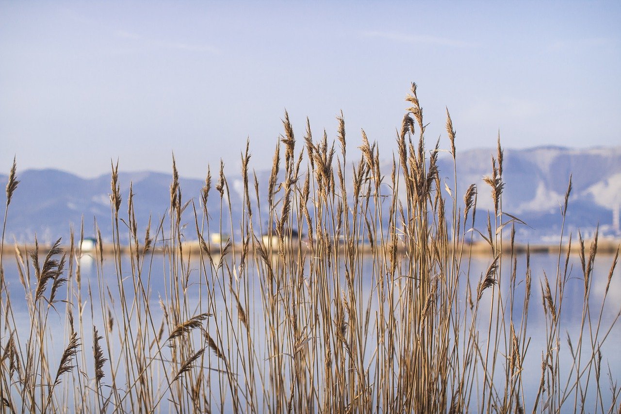 grass  bay  reeds free photo