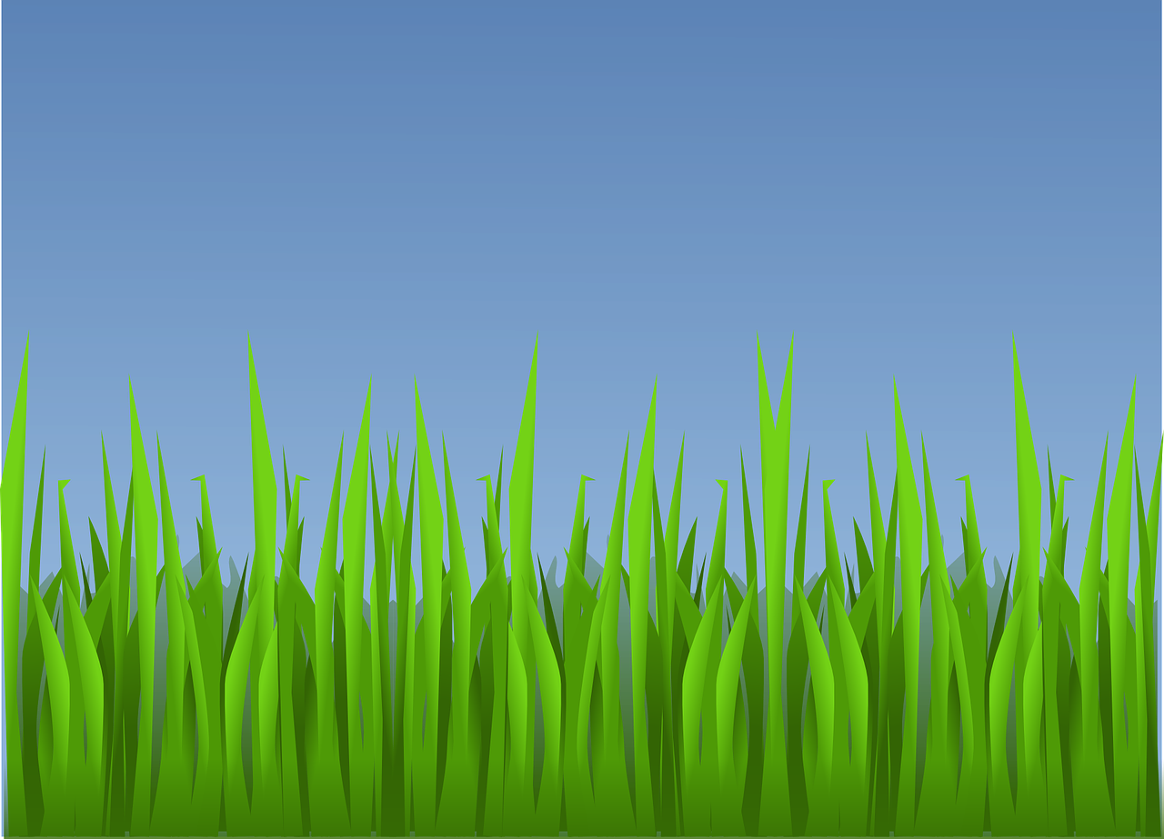 grass landscape wallpaper free photo