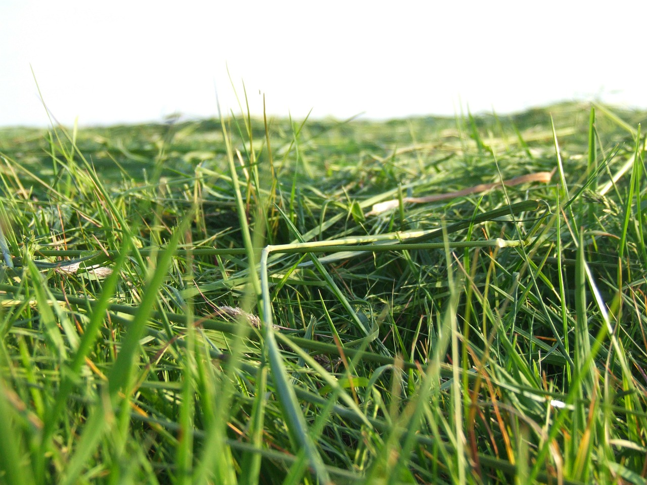 grass meadow mowed free photo
