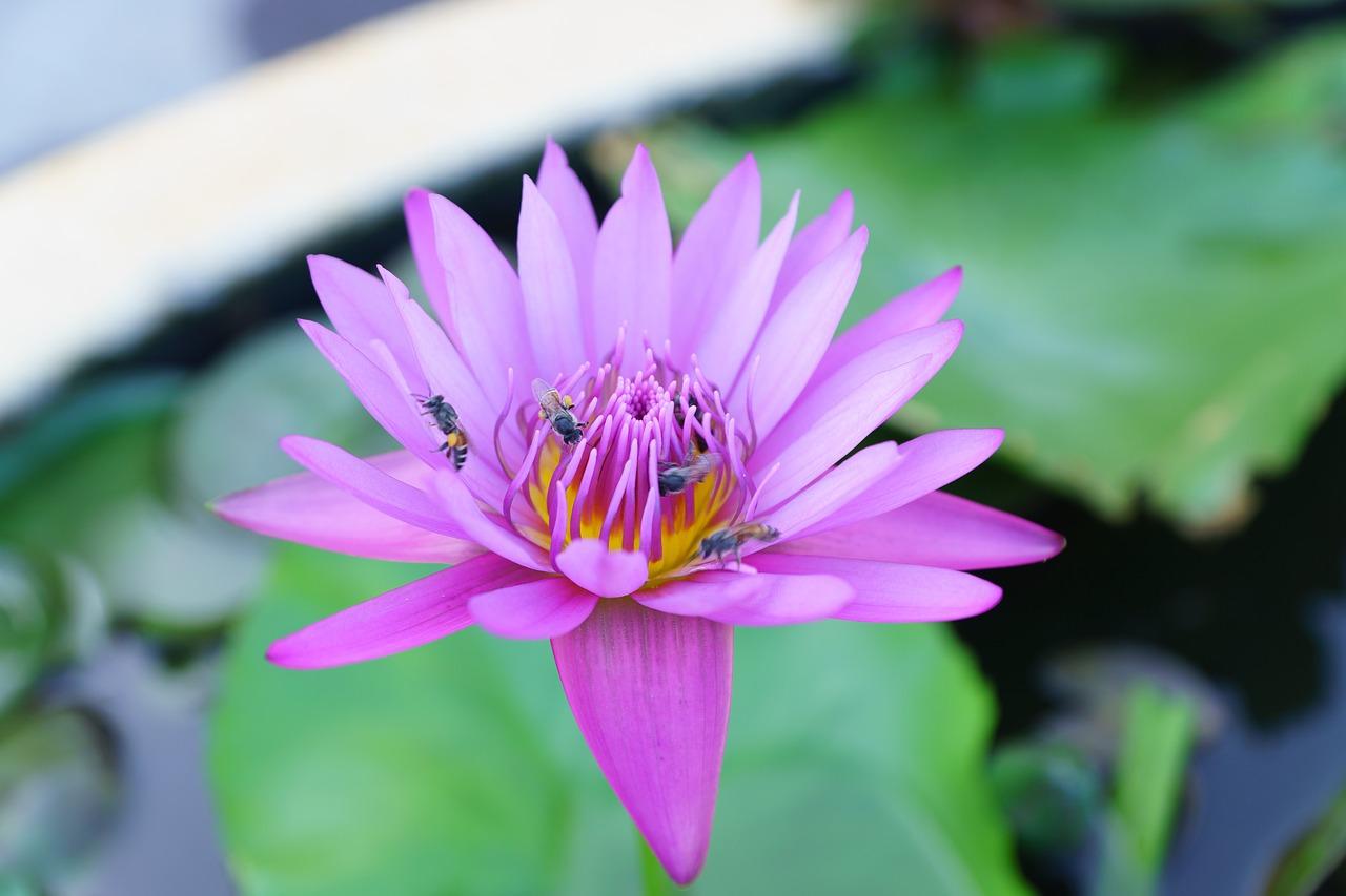 Greennaturesceneryflowerbeautiful Flowers Free Photo From