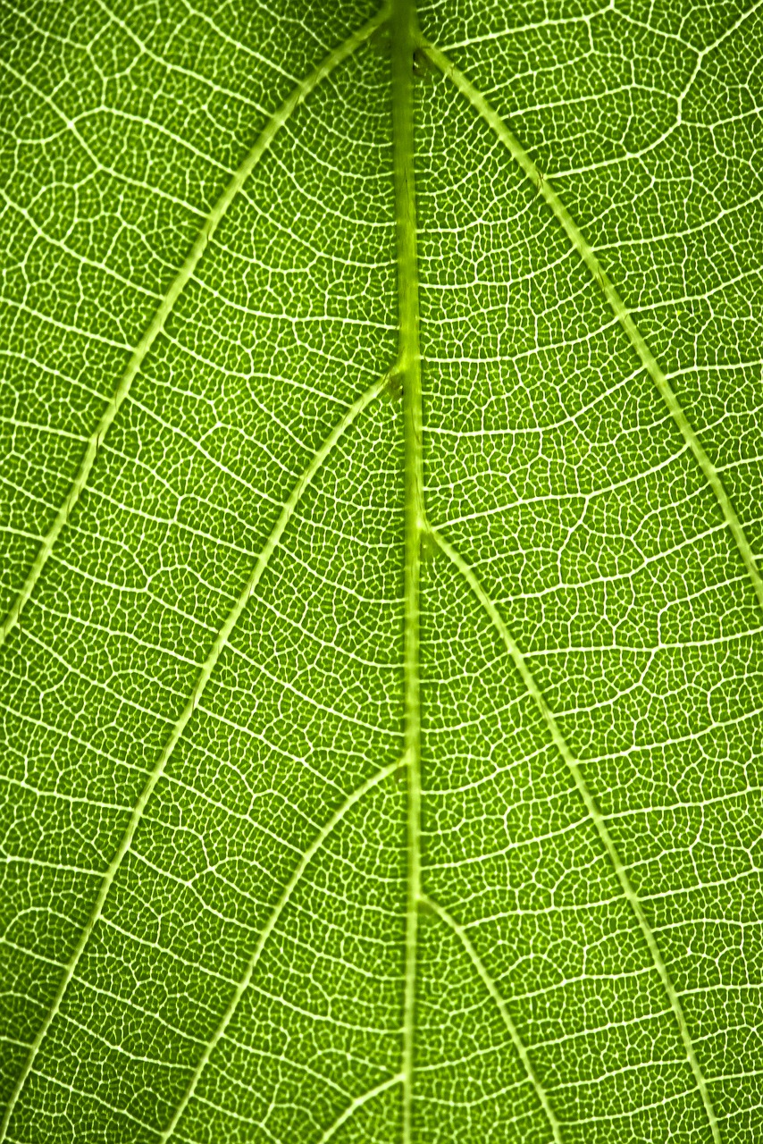 green  leaf  leaves free photo
