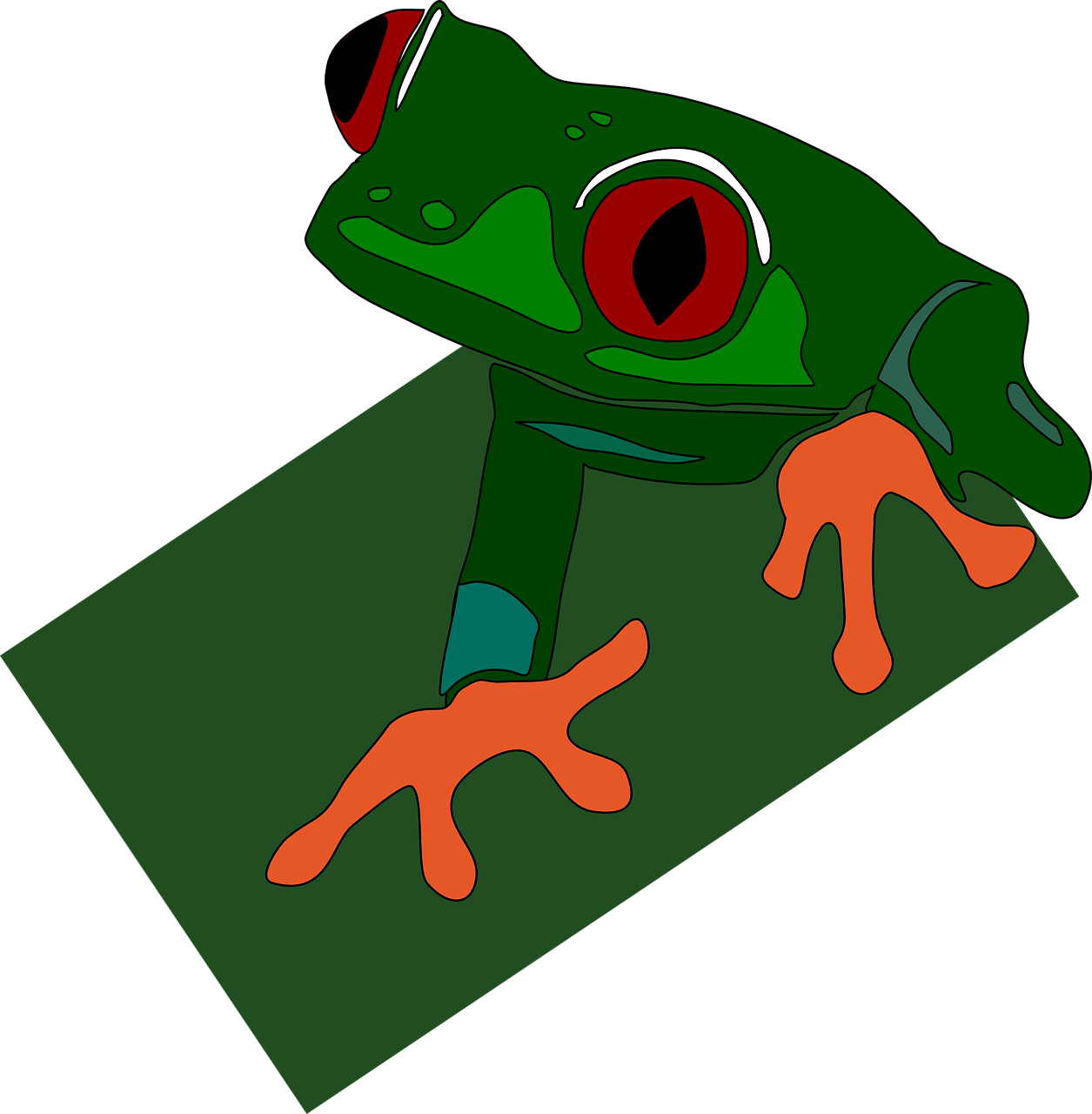 green frog red free photo