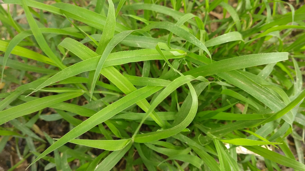 green images natural green green leaves free photo