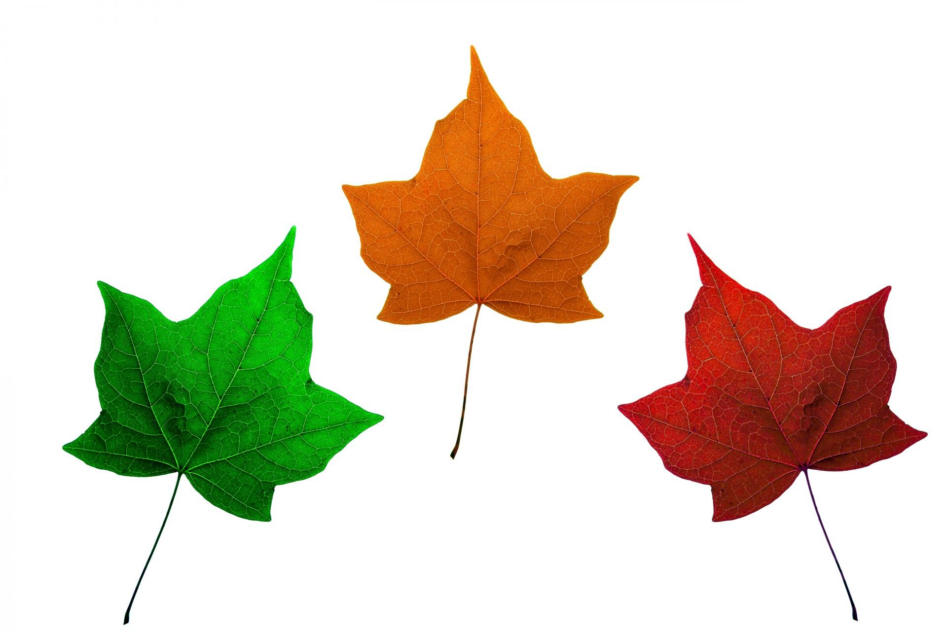 компании картинки листы разного цвета вами