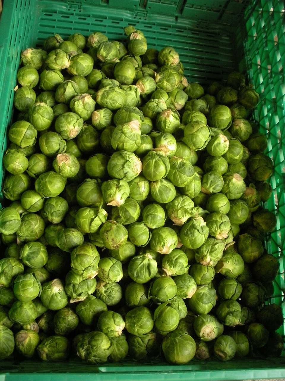 greengrocer brussels sprouts fresh free photo