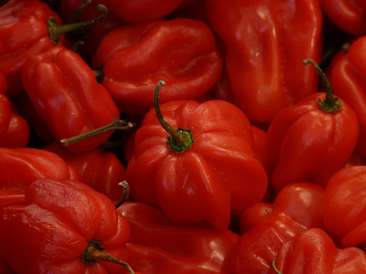 habaneros red vegetables free photo