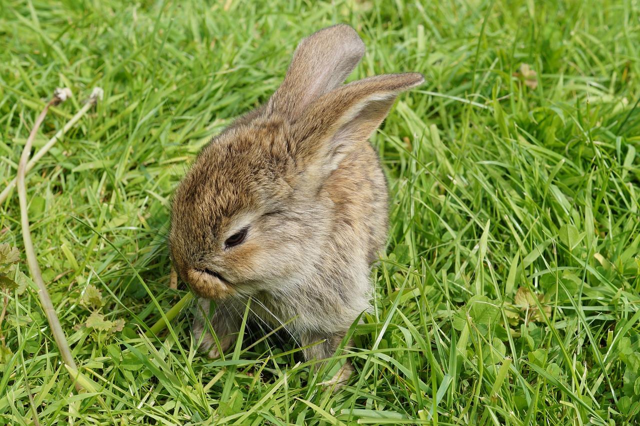 грызуны зайцы кролики фото описание или