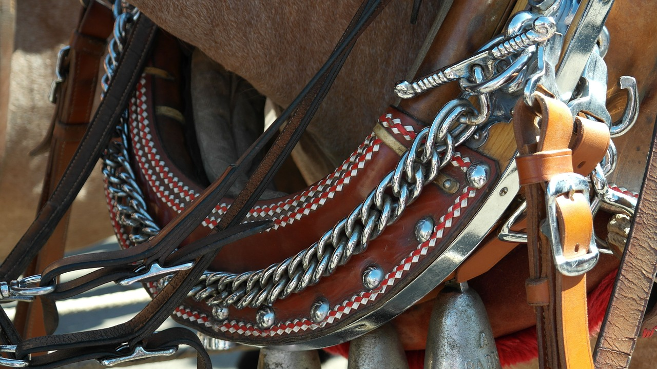 harness for horses horse reins free photo