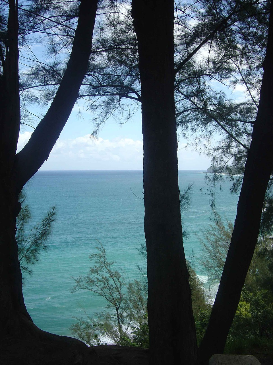 hawaii ocean trees free picture